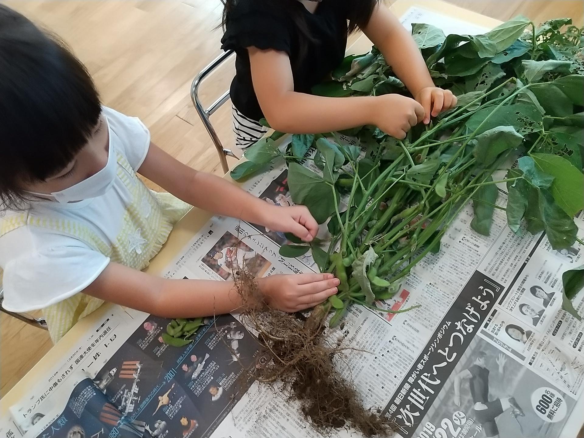 枝豆をちぎる子どもたち