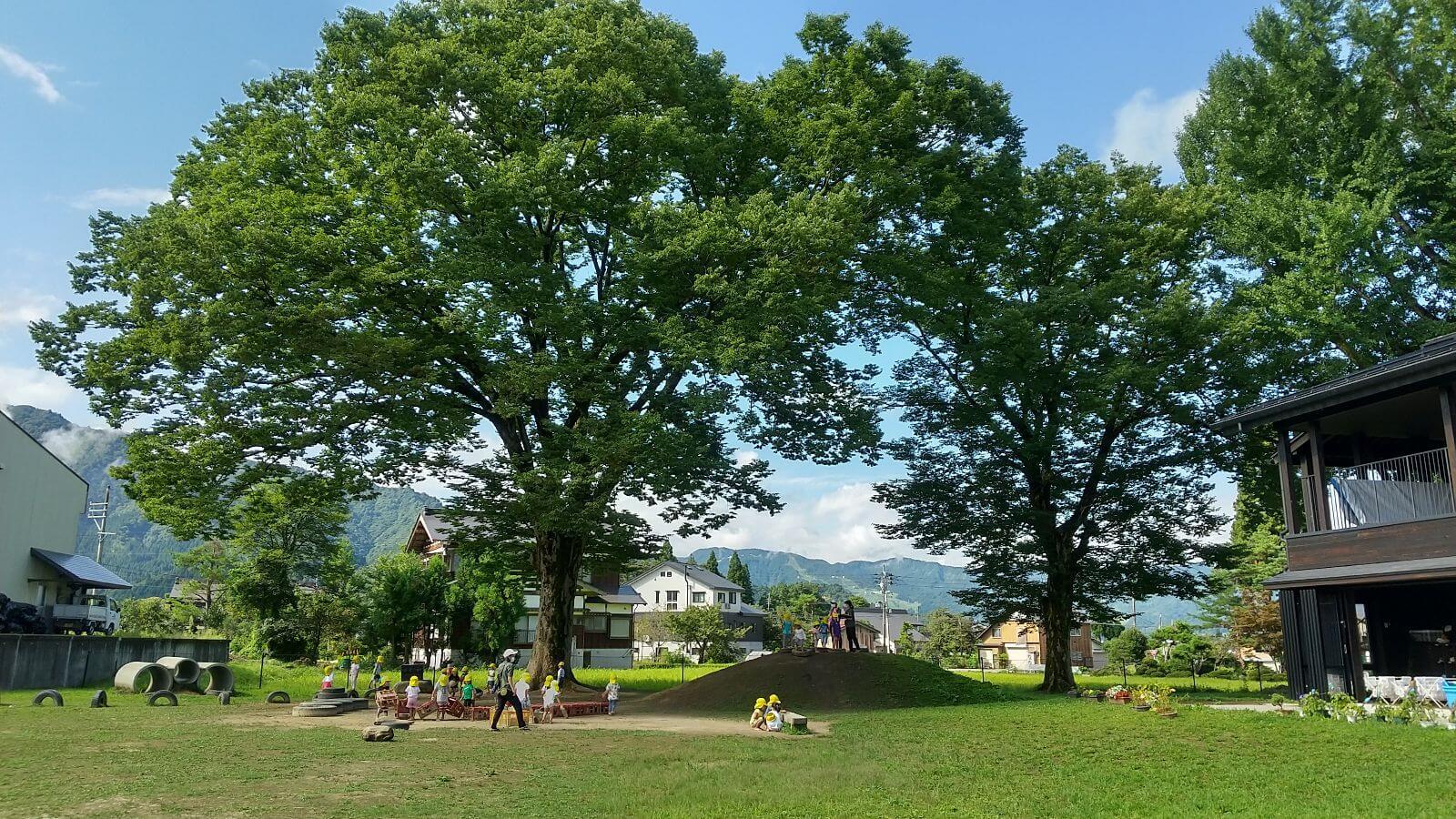 南魚沼どろんこ保育園園庭の欅の木