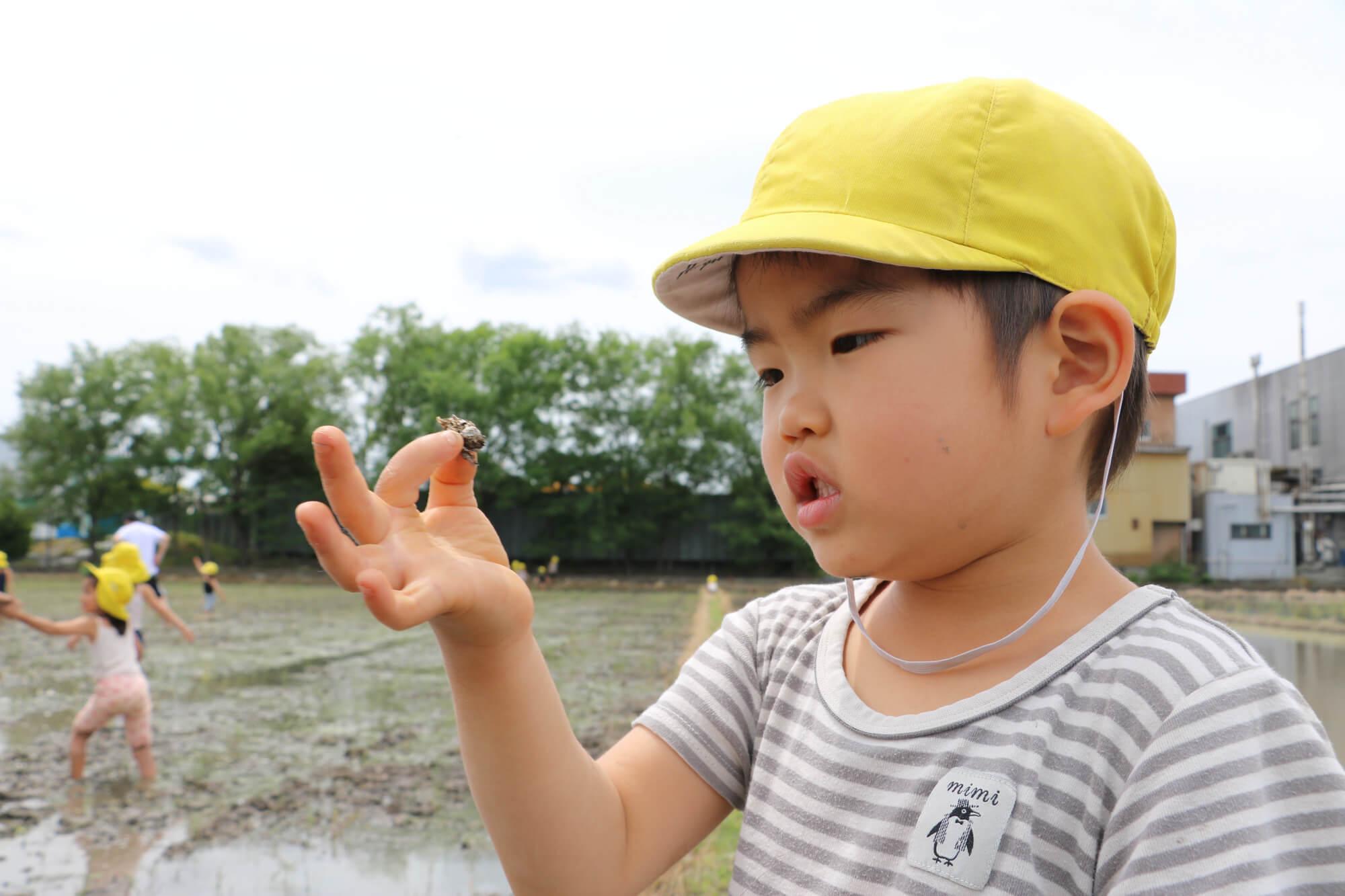 タニシを捕まえて観察する子ども