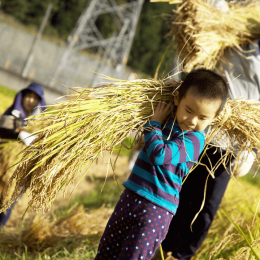「どろんこ米 稲刈りツアー2015」体験レポート